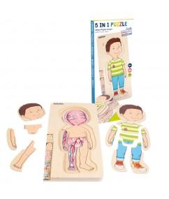 puzzel - hout - jongens groei puzzel - body puzzle boy - speelgoed - houten speelgoed - kleuter - peuter - dn houten tol - de mouthoeve - boekel - 17170 - winkel - beleduc