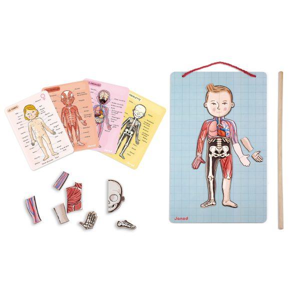Janod Spel - Het menselijk lichaam - spel - janod - kinderspel - speelgoed - educatief speelgoed - houten speelgoed - dn houten tol - de mouthoeve - boekel - speelgoedwinkel boekel - shop - webshop - magneten - magnetisch spel